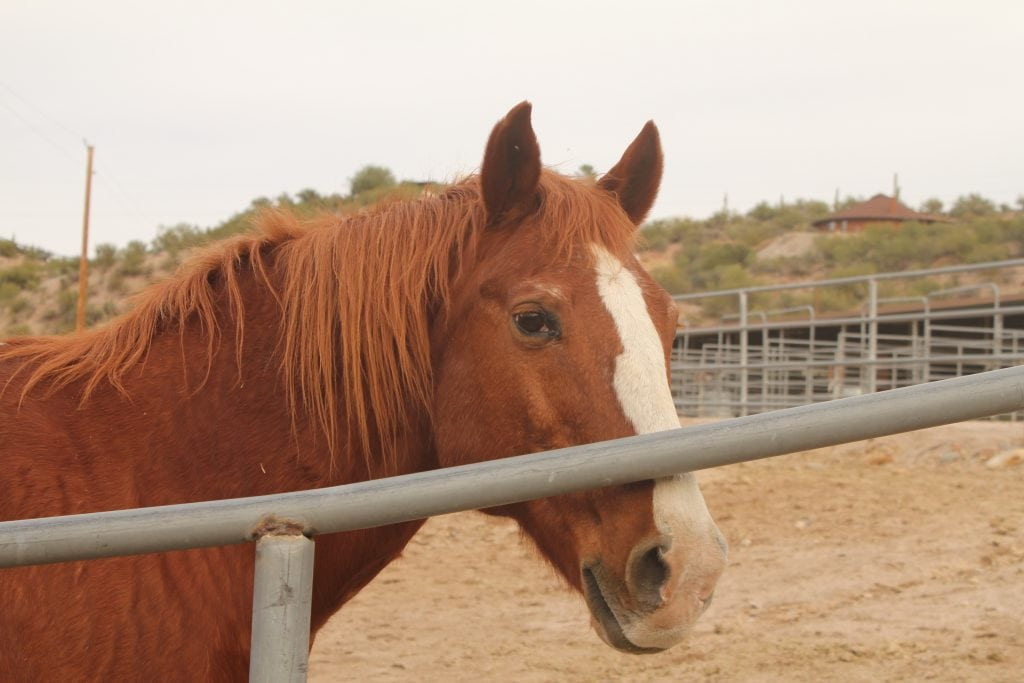The Meadows Ranch Horse